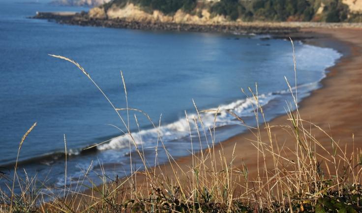 mer-bleu-avec-herbes copie