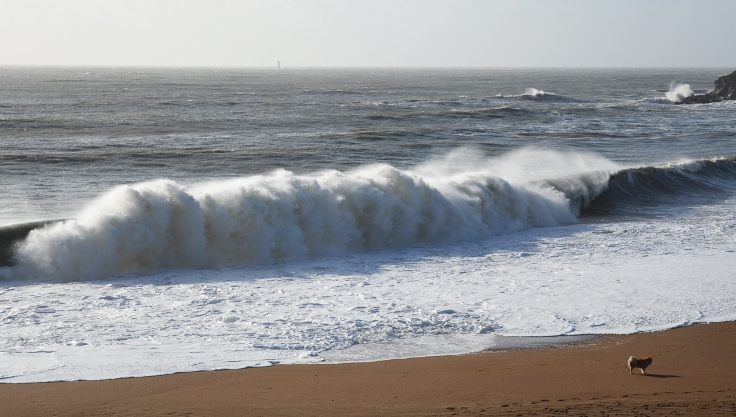 vague-Courance-avec-chien