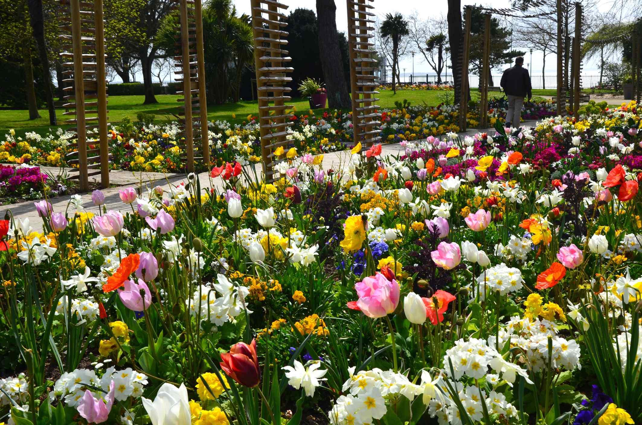printemps-colore