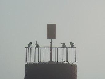 brume-cormorans-1